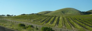Vineyards in Central California