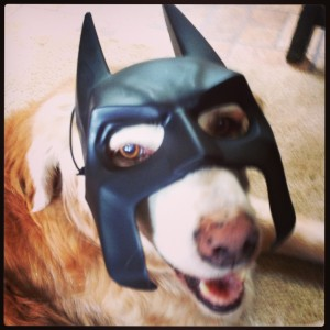 I'm Batdog!