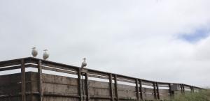 Seagulls in Long Beach, WA