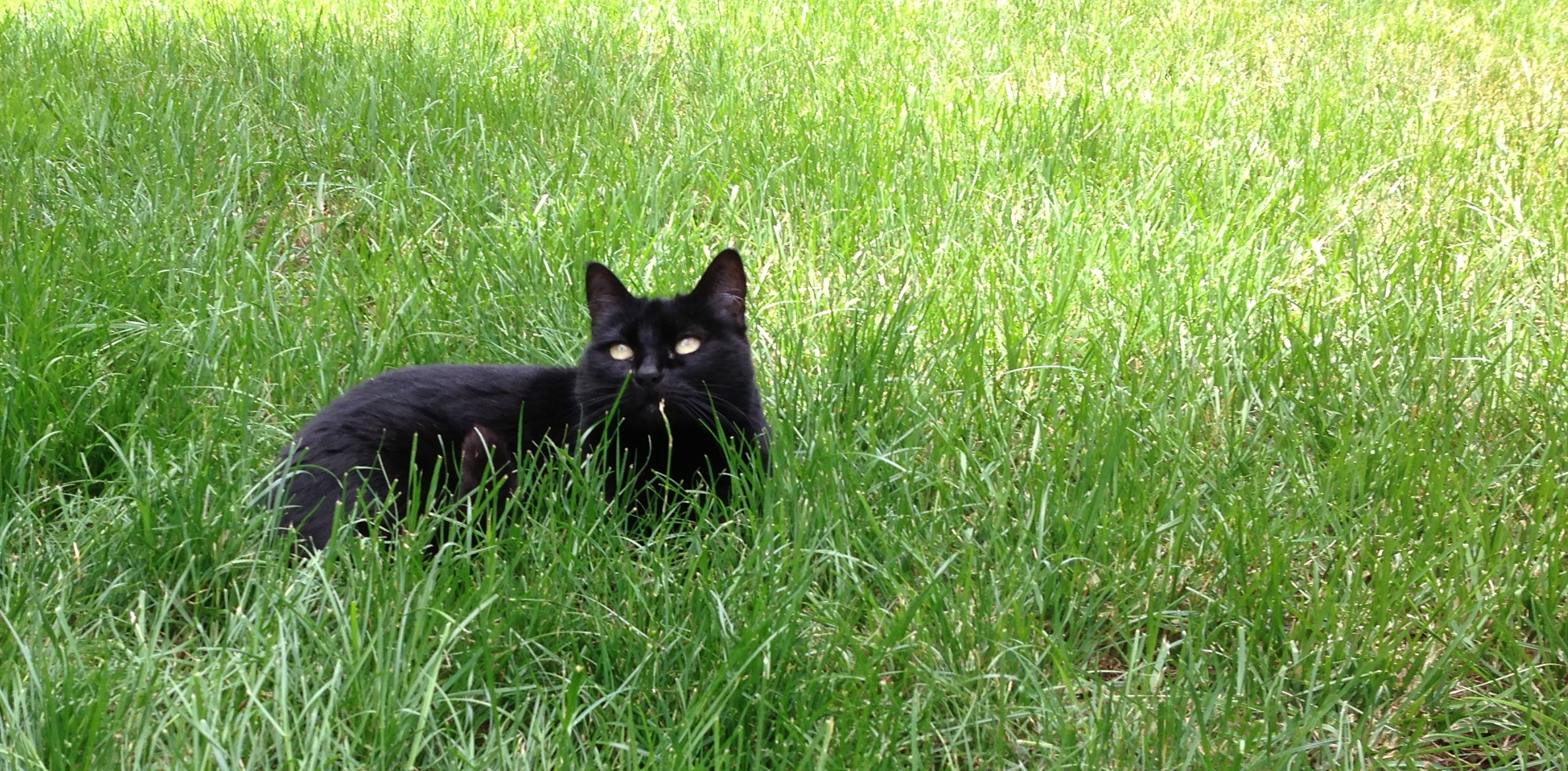 Kitters in the Grass