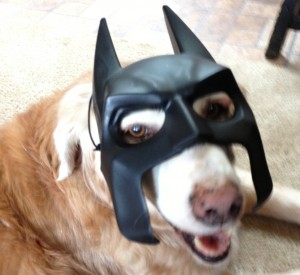 It's Batdog!  Dinah loves to dress up!