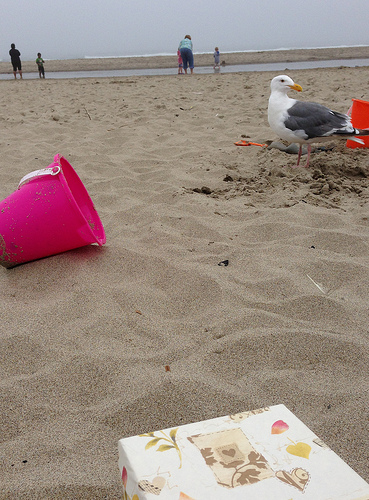 Dinah at the beach with a seagull