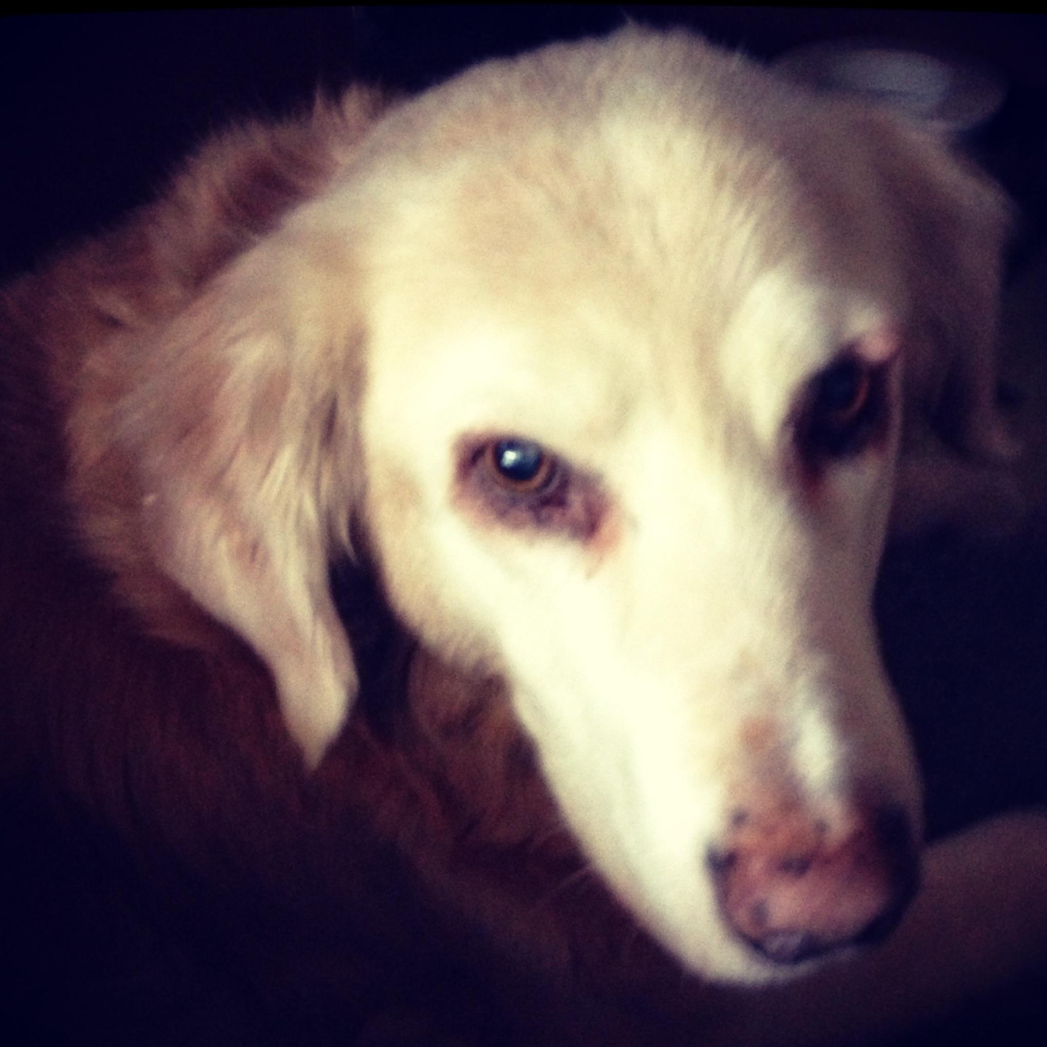 Dinah Dog