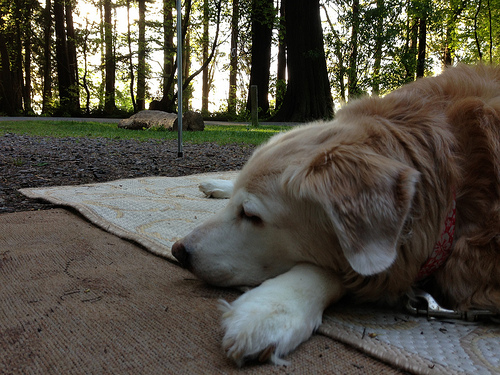 Dinah relaxing at the campground