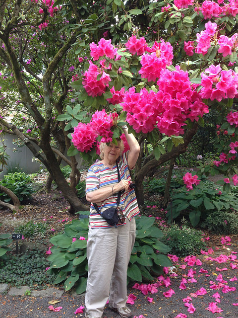 Linda and the bright pink rhodie
