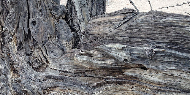 Another close-up of bark on an old tree