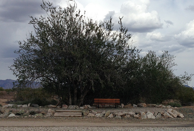 A bench in the middle of nowhere, alongside the multi-use trail.