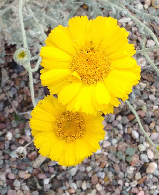 Yellow flowers blooming everywhere