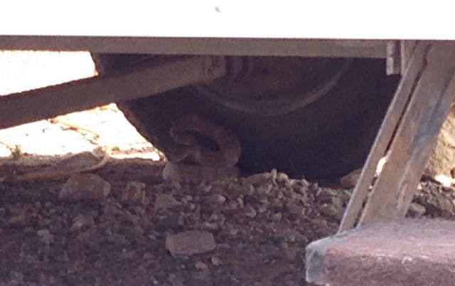 snake at wheel