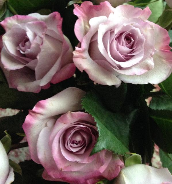 Roses from Mackenzie