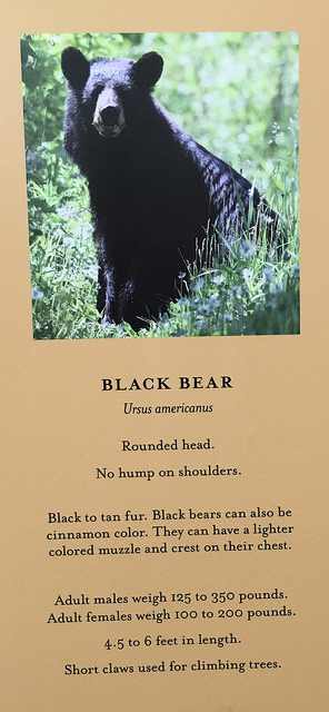 ca-black-bear