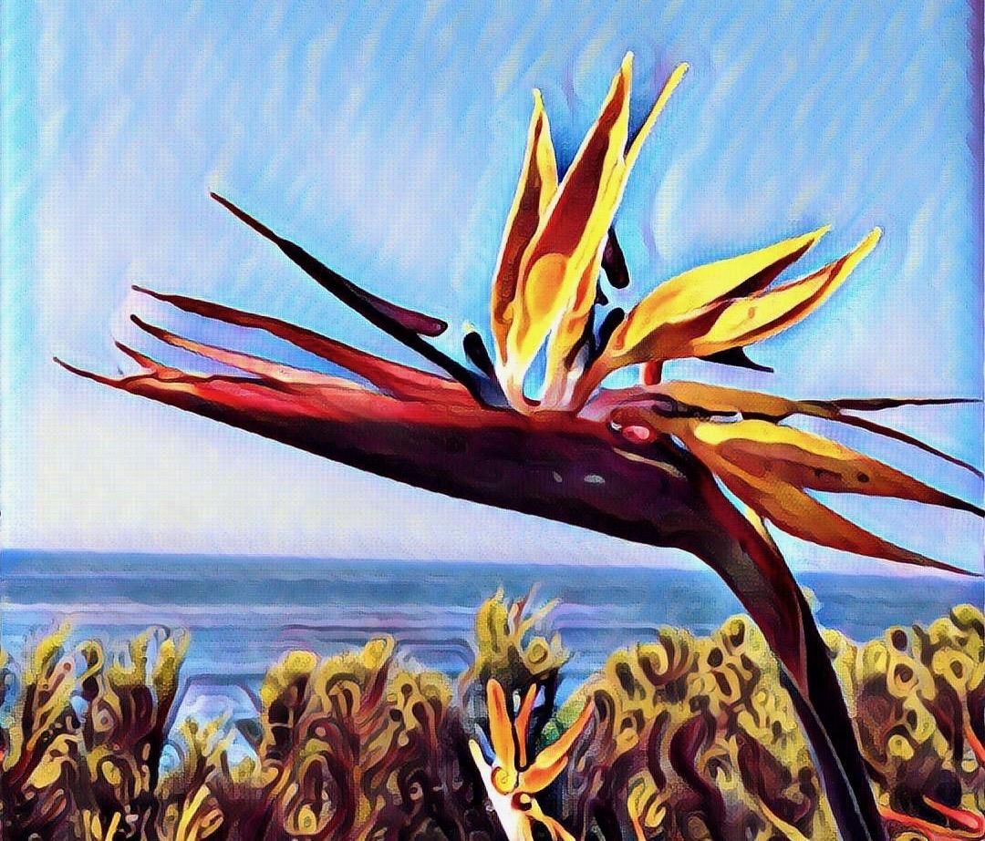 prisma bird of paradise