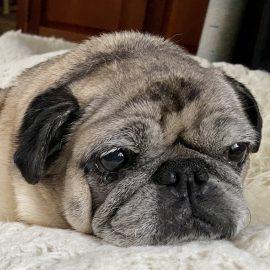 Lois' Doggie Daycare